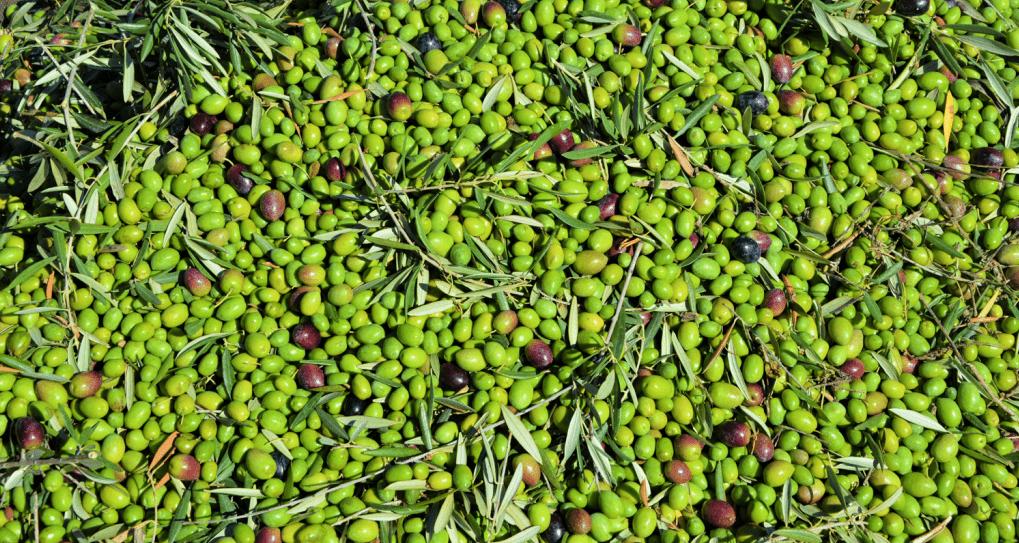 aceite-verde-carrasqueño-1024x681